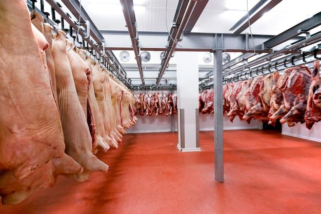 Dużo posiekanego świeżego surowego mięsa wieprzowego i wołowego jest zawieszane i układane i przetwarzane w lodówce, w fabryce.
