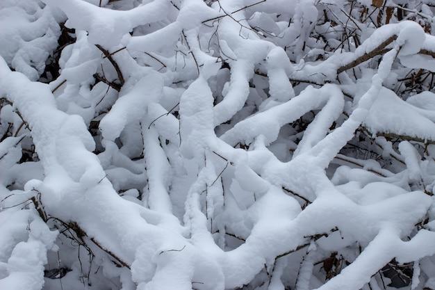 Dużo śniegu na gałęziach z bliska zimą