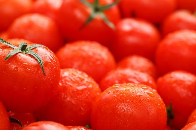 Dużo świeżych dojrzałych pomidorów z kroplami rosy.