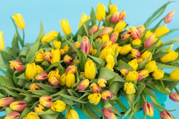 Duży bukiet czerwonych i żółtych tulipanów na niebieskiej ścianie