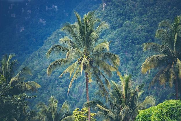 Duży drzewo w tropikalnym lesie, natury scena