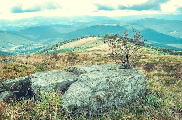 Duży kamień i małe suche drzewo w górach, filtr