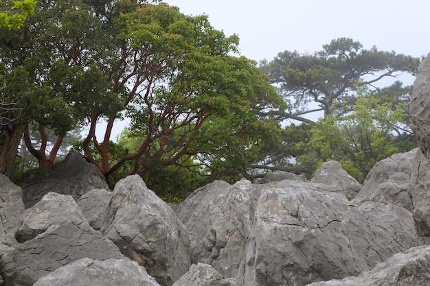 Duży kamień w mglistym wiosennym górskim lesie (krym, ukraina)