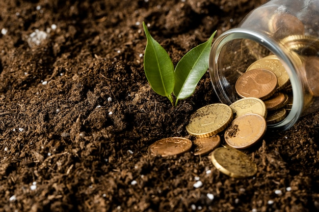 Duży kąt wysypywania monet ze słoika na ziemię z rośliną