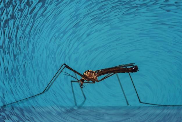 Duży komar siedzi na niebieskiej ścianie z bliska