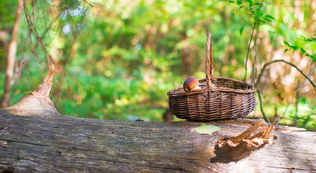 Duży kosz z pieczarkami na starym drzewie w jesień lesie