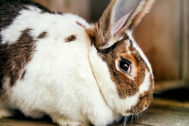 Duży królik siedzi w klatce.