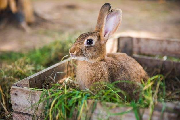 Duży królik stoi w drewnianym pudełku z sianem.