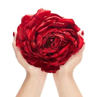 Duży kwiat stworzony z płatków czerwonych tulipanów