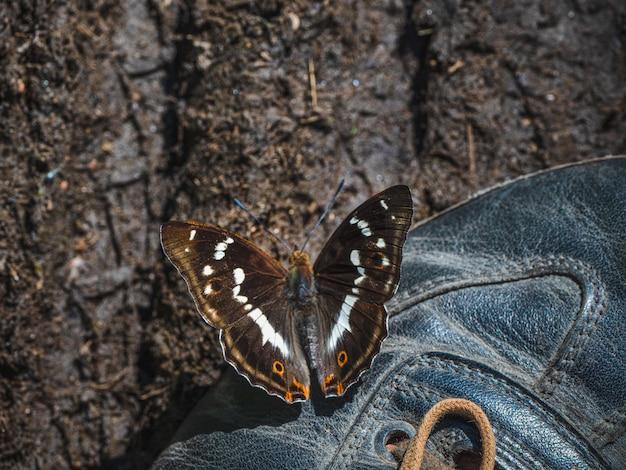 Duży motyl fioletowy cesarz (apatura ilia) siedzi na bucie w słoneczny letni dzień. koncepcja podróży