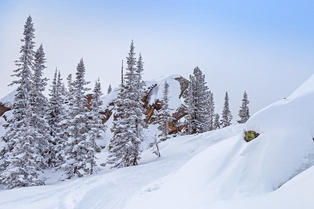 Duży piękny kamień i sosna pokryte śniegiem na szczycie góry utuya