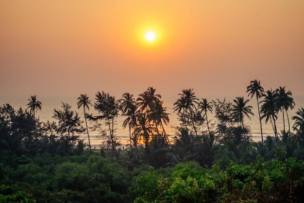 Duży piękny zachód słońca z widokiem na palmy