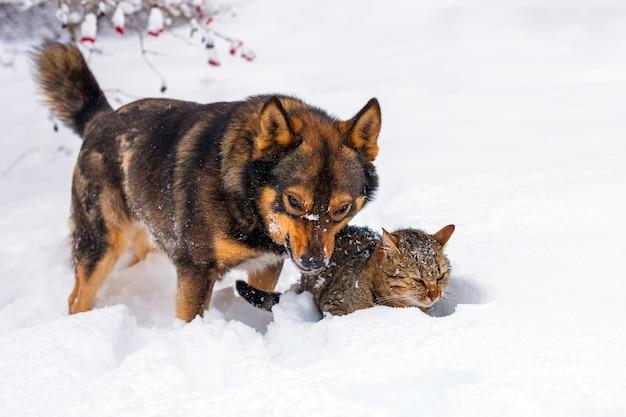 Duży pies i kot bawiący się w śniegu
