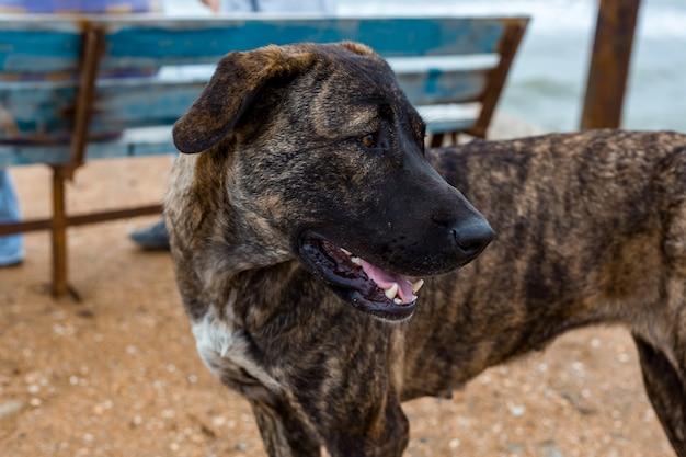 Duży pies odwraca wzrok portret zwierząt
