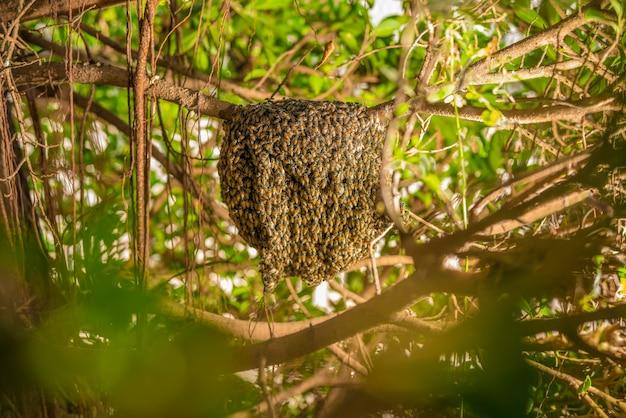 Duży plaster miodu na drzewie w tropikalnym lesie deszczowym.