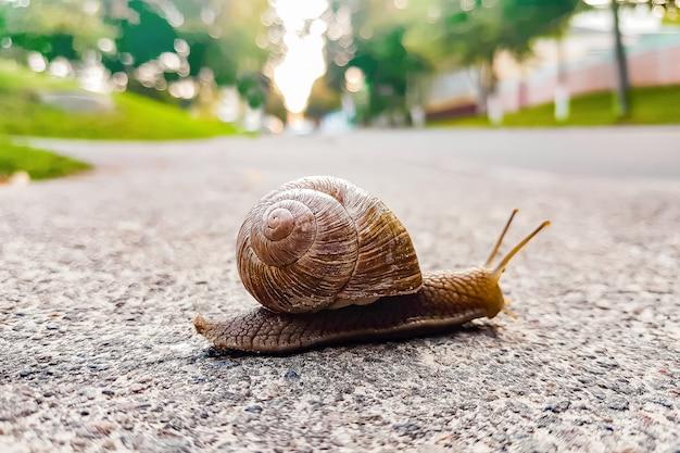 Duży ślimaczka zakończenie czołgać się na drodze