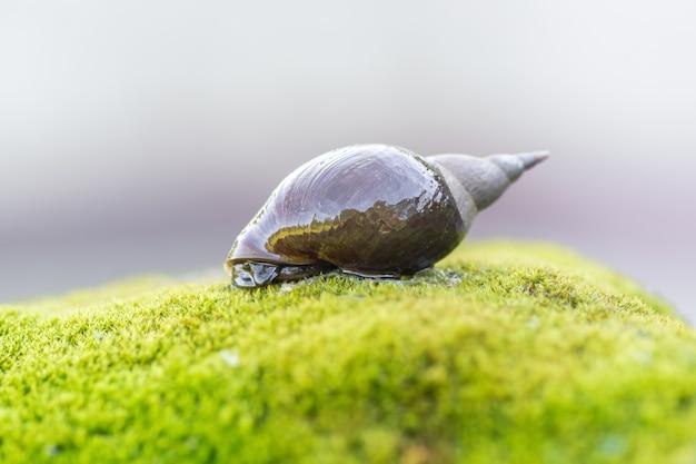 Duży ślimak czołga się po kamieniu pokrytym mchem