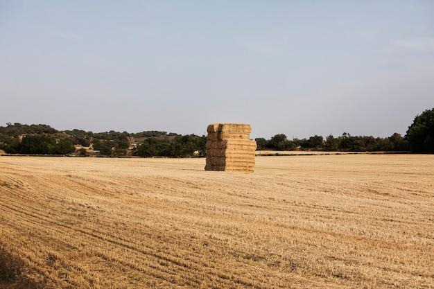 Duży stóg siana na środku pola na wsi