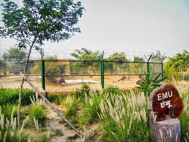Duży struś ptak w parku zoologicznym