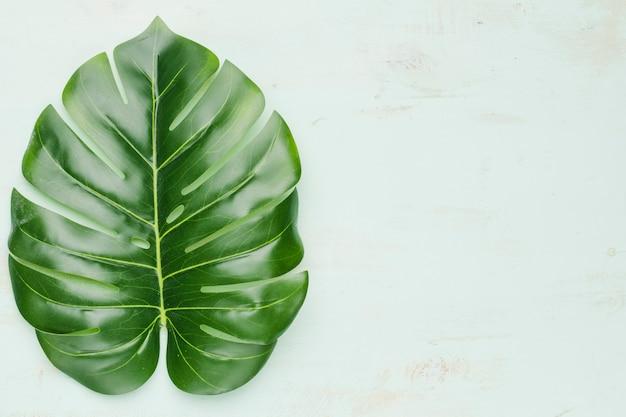 Duży tropikalny liść na lekkim tle