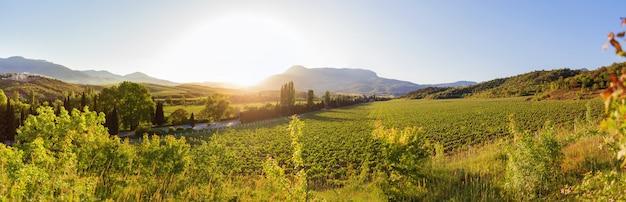 Duży widok na panoramę winnic w pobliżu ałuszty