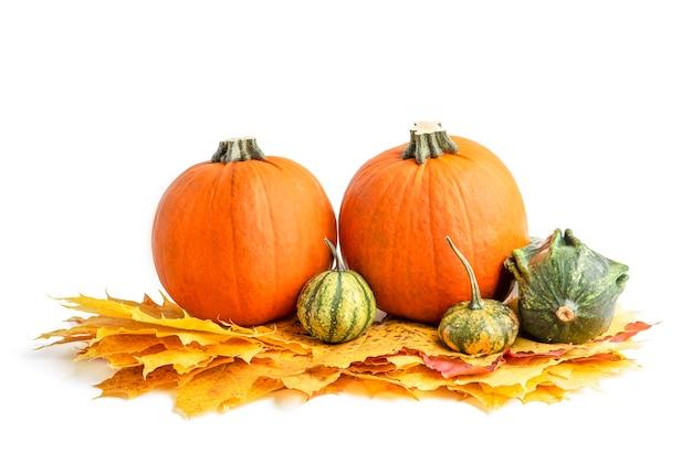 Duży zestaw małych dyni i dyni do dekoracji na halloween. wyizoluj na białym tle. jesienny zestaw ozdobnych dyni i liści klonu.