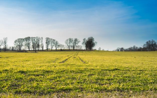 Duży zielony krajobraz porośnięty trawą, otoczony drzewami