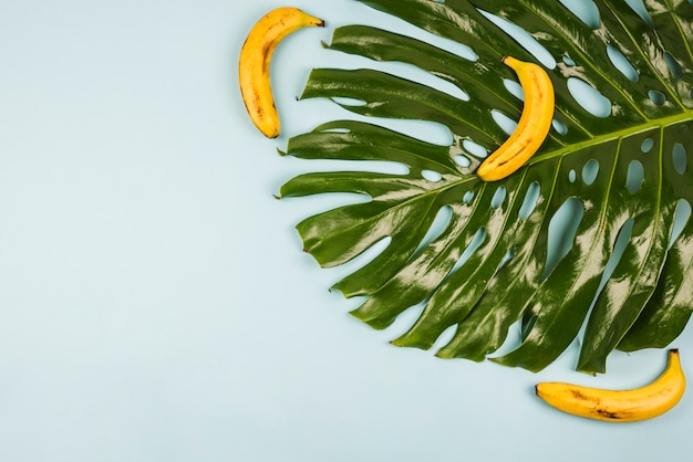 Duży zielony liść monstera wśród bananów