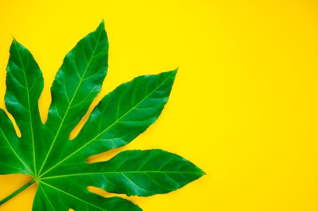Duży zielony liść na żółtym tle, płaskie świeckich, miejsce