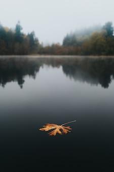 Duży złoty jesienny liść unoszący się w jeziorze z pięknym naturalnym tłem i refleksami