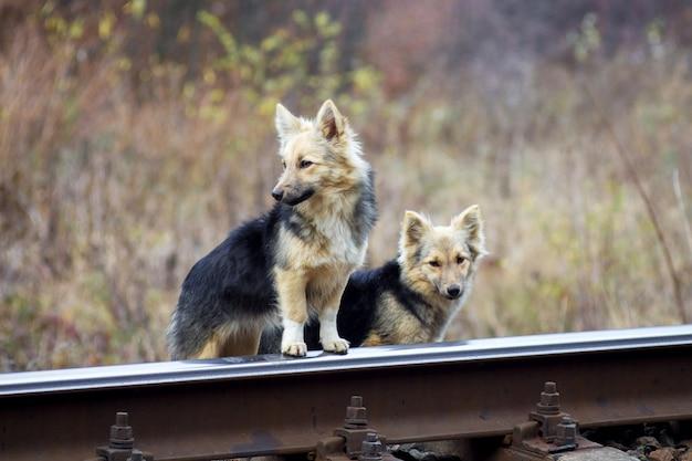 Dwa bezdomne psy w pobliżu torów kolejowych
