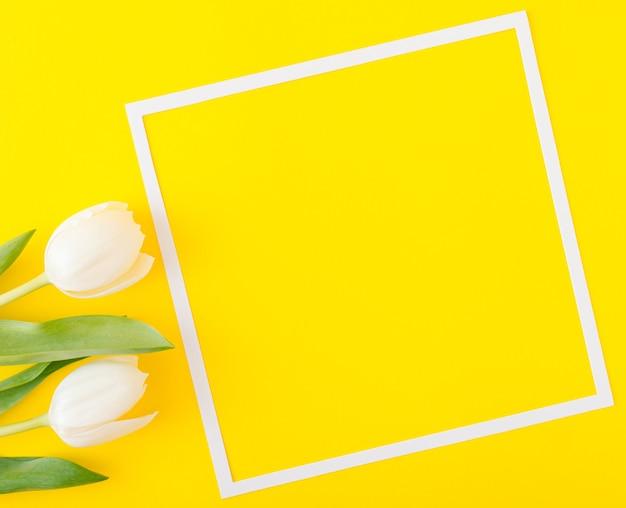 Dwa białe kwiaty tulipanów na żółtym tle z białą ramką. duża przestrzeń kopii. wiosna optymistyczna koncepcja. minimalistyczny styl. płaskie ułożenie