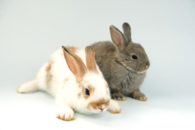 Dwa brązowe króliki sparowane na białym tle.