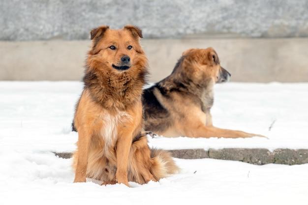 Dwa brązowe psy zimą na śniegu