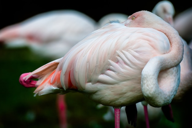 Dwa czerwone flamingi w stawie, rosyjski park