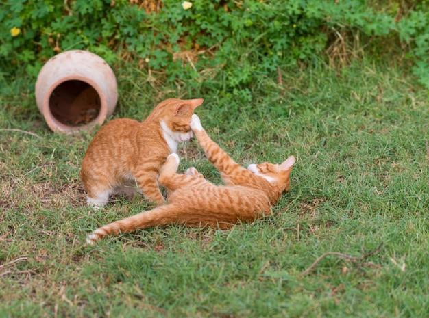 Dwa czerwone kocięta