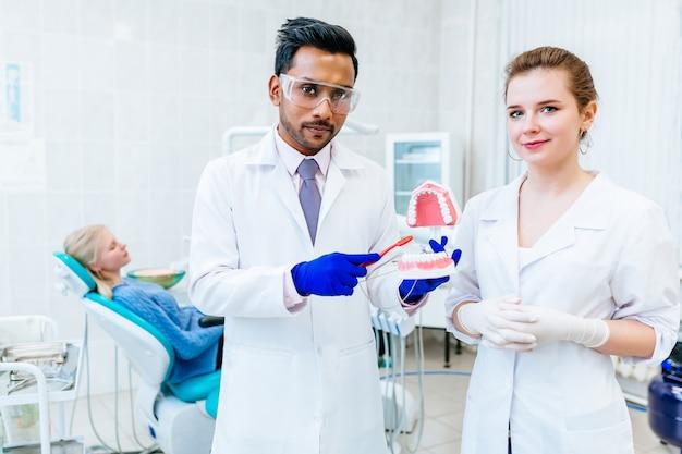 Dwa dentysta pokazuje szczęka modela w klinice