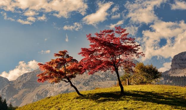 Dwa drzewa o pięknych kolorach jesieni