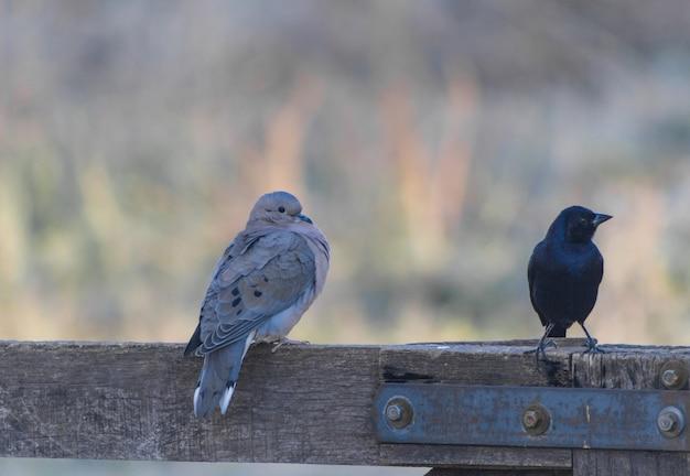 Dwa gatunki ptaków siedzące na drewnianej bramie w zimowe popołudnie