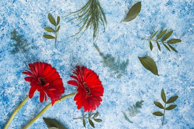 Dwa gerbera kwiatu z zielonymi liśćmi