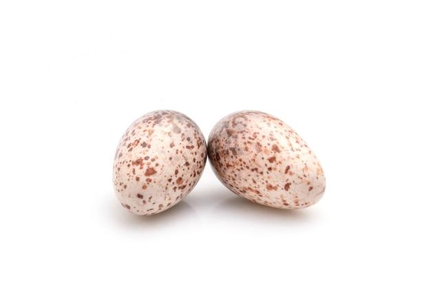 Dwa jajka gołąbek ptaki na bielu