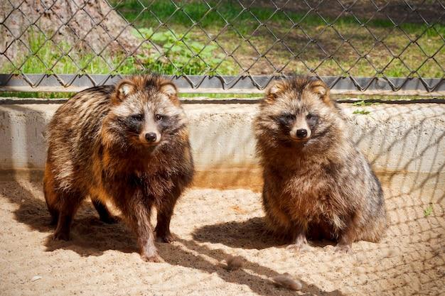 Dwa jenoty w szkółce dla zwierząt