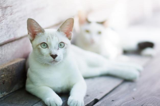 Dwa kociaka kota siedzi i cieszy się na drewnianym tarasie z światłem słonecznym
