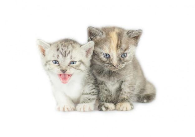 Dwa kociaki w paski izolowane