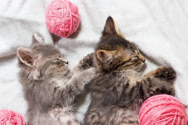 Dwa kociaki w szare paski śpią na boku i przytulają się z góry