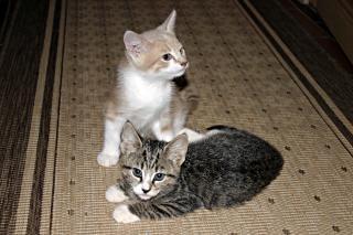 Dwa kociaki