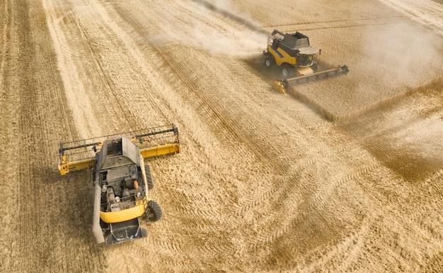 Dwa kombajny zbierają ziarno na polu pszenicy