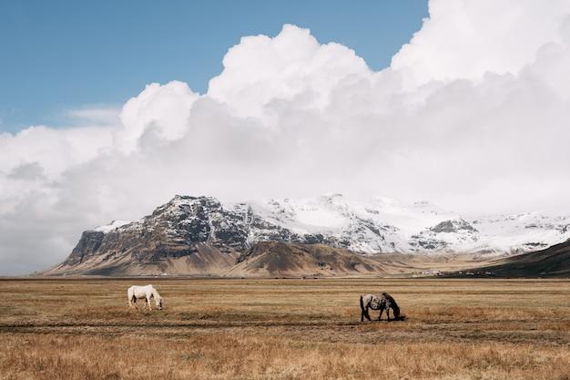 Dwa konie na tle skalistej, ośnieżonej góry
