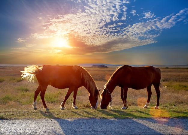 Dwa konie pasące się na łące o zachodzie słońca