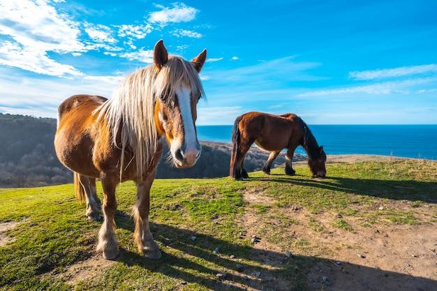 Dwa konie wolne od góry jaizkibel i skrzydlate morze w pobliżu san sebastian, gipuzkoa. hiszpania